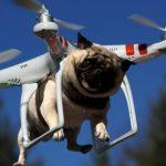 7 coisas inacreditáveis que os drones já podem fazer